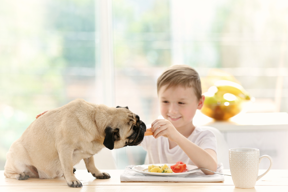Caring For A Pet Teaches Responsibility
