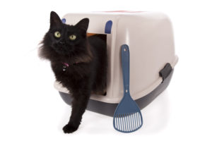 Use An Automatic Cat Litter Box