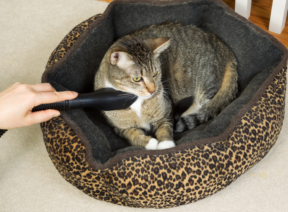 Using Vacuum for Pet Hair