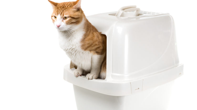 Best Automatic Litter Box Reviews 2017-For You And Your Cat
