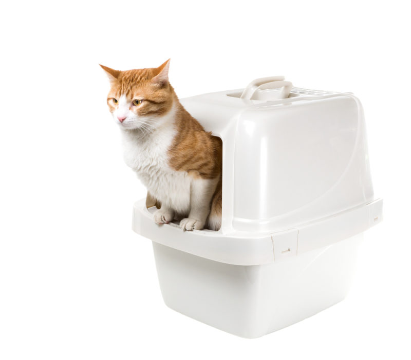 do you own a cat are you thinking of buying or replacing an automatic cat litter box if so then thatu0027s great because your kitty deserves only the best