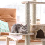 What You Need to Know About Purchasing the Best Cat Tree 2019