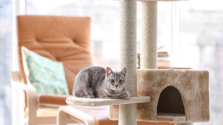What You Need to Know About Purchasing the Best Cat Tree