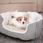Best Dog Beds 2017? The Top 8 You Should Invest In