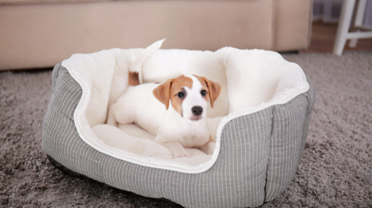 Best Dog Beds