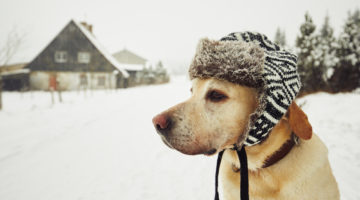 How to Keep Your Pet Warm in the Winter
