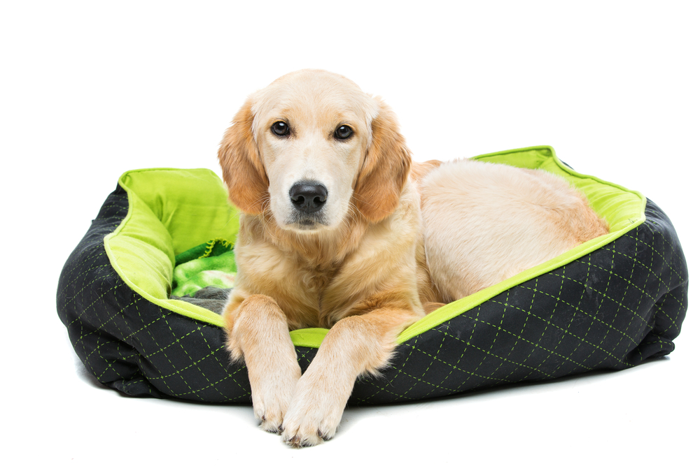How to Purchase the Best Dog Bed