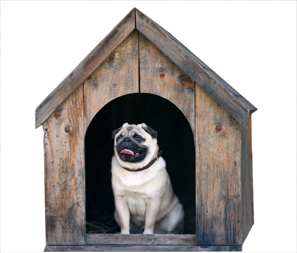 pug dog in the dog house