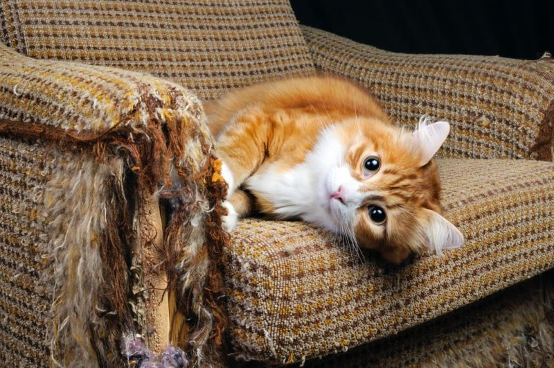 How To Protect Furniture From A Cat S Scratching Behaviour