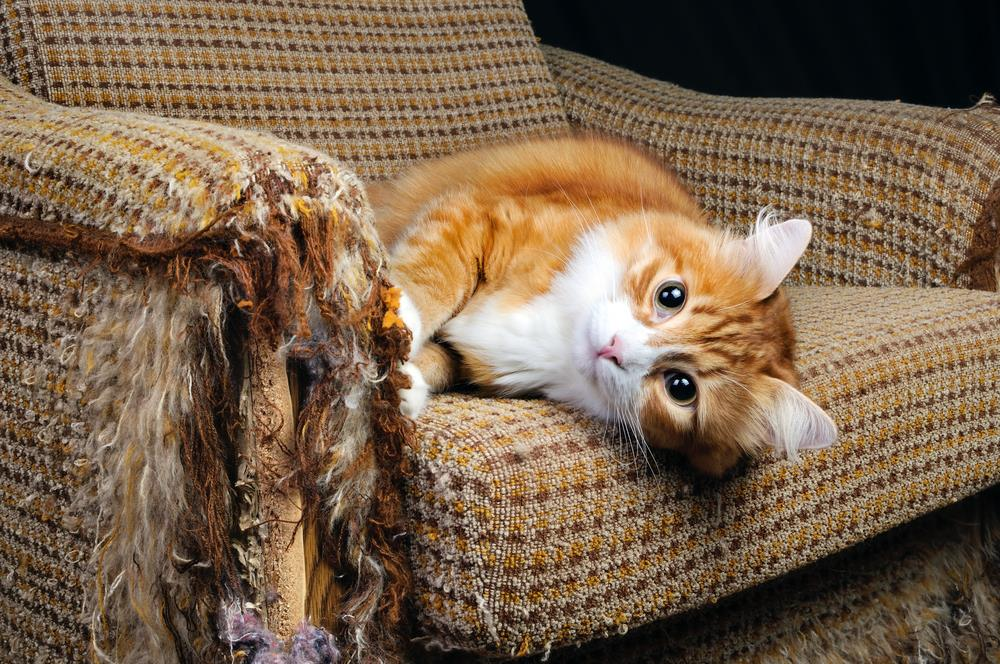 How to Protect Furniture From a Cat's Scratching Behaviour