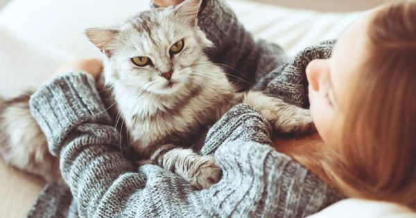 What A Cat Owner Needs To Know Before During And After A