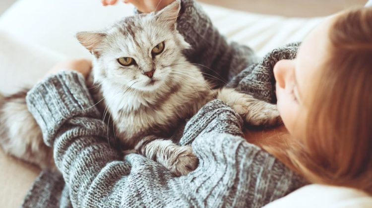 What A Cat Owner Needs to Know Before, During and After A Cat Gives Birth