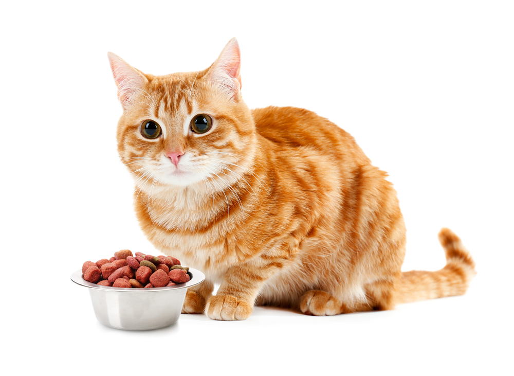 for cats to eat enough food
