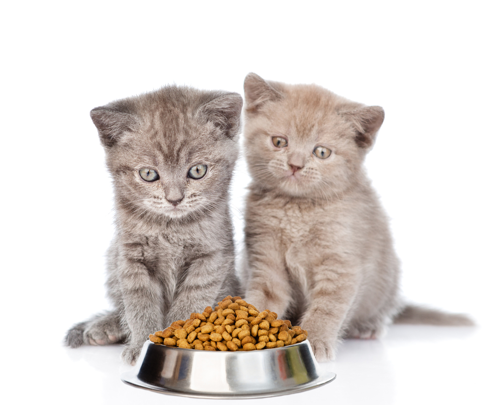 Choose The Best Kitten Food