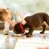 The 10 Best Puppy Food Reviews 2018 – You Need to Check Out Now!