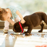 The 10 Best Puppy Food Reviews 2020 - You Need to Check Out Now!