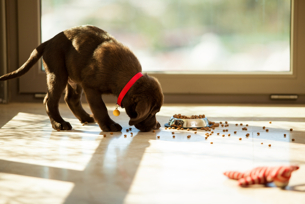 Difference Between Adult and Puppy Food