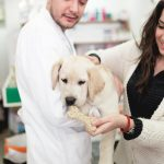 10 Mistakes New Dog Owners Must Avoid
