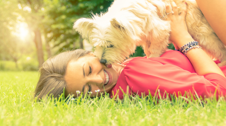 10 tricks to make dog love you